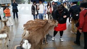 Bowing deer of Nara!
